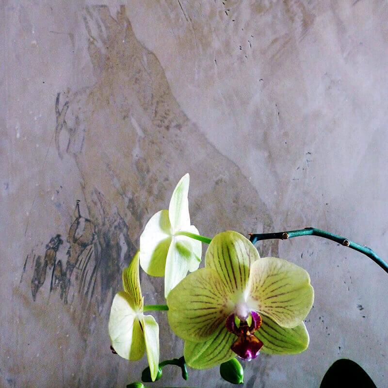 Stucco Cera Punica
